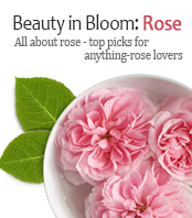 BEAUTY IN BLOOM: ROSE